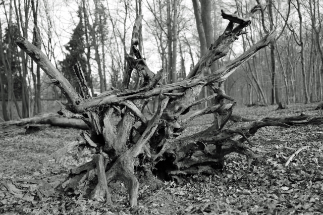 Forest art - Waldkunst I_1
