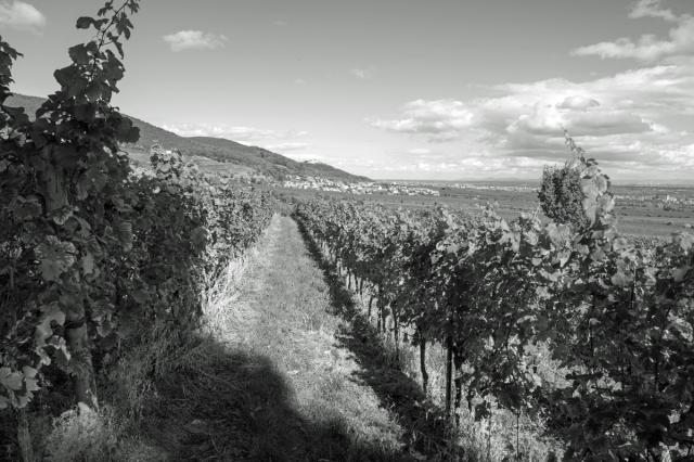 wein-wine-iii