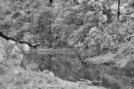 Hidden pond - Versteckter Teich