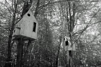 Waldkunst_5