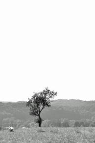 Lonely tree - Einsamer Baum