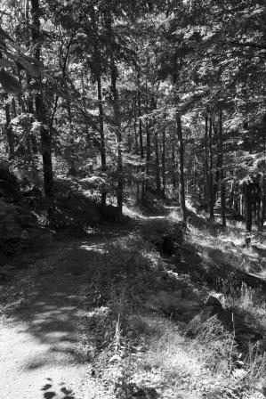 Forest-interior-Waldinnenraum_4