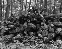 Pile-of-wood